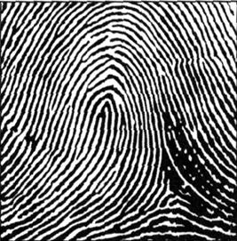 phân loại chủng vân tay